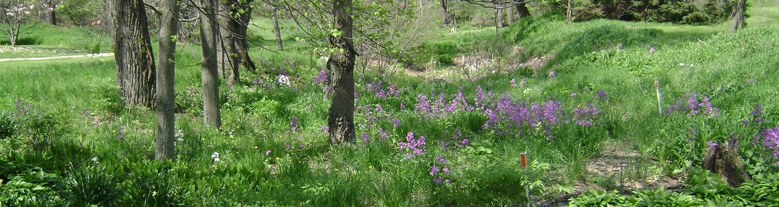 DSC01839-purpleflowers-crop