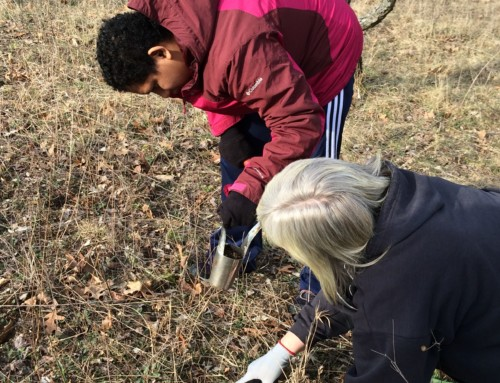 Lincoln School Students Plant Spring Flowers